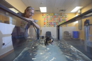 pet rehabilitation therapy